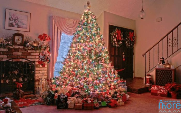 елки в Сочи